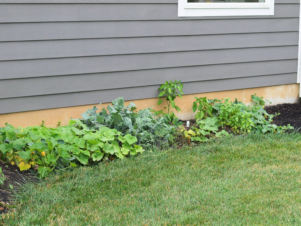 Novice Gardening Adventures