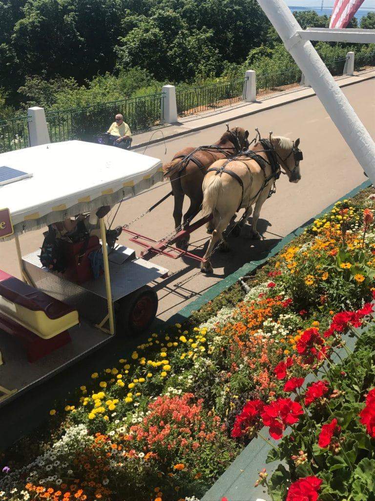 Northern Michigan Vacation--horses on Mackinac Island