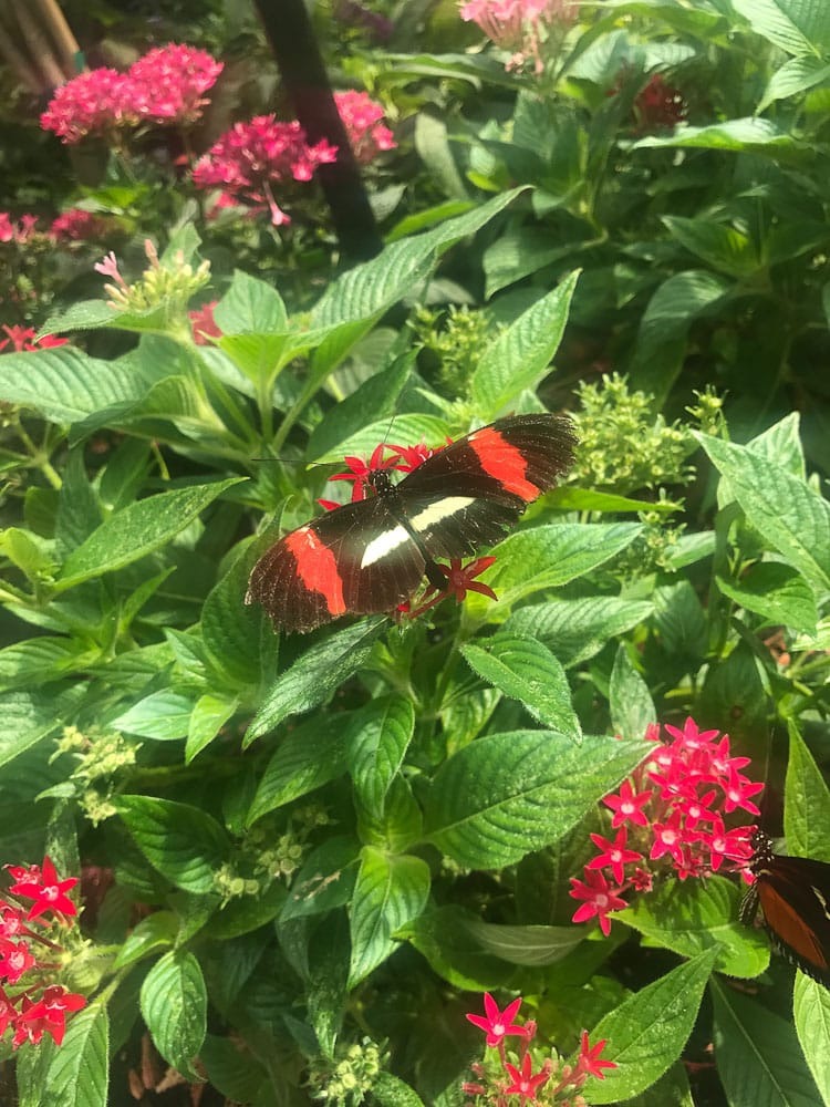 Northern Michigan vacation Butterfly House Mackinac Island butterfilies