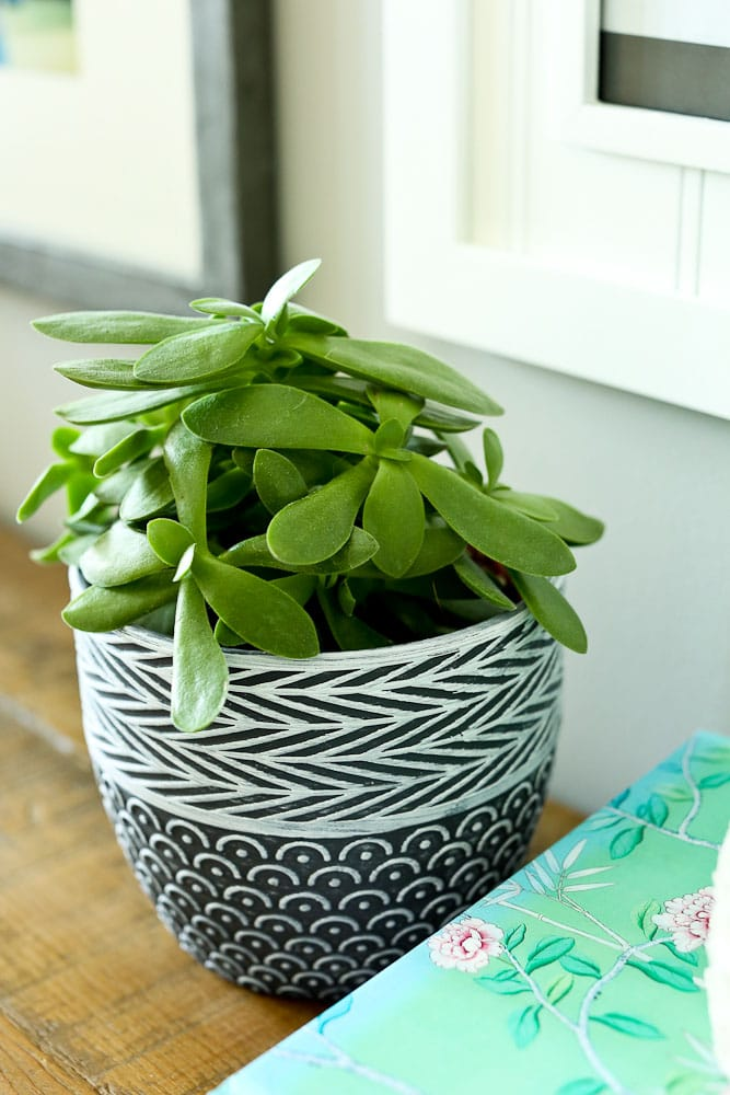 use household plants to reduce the indoor air pollution in your home