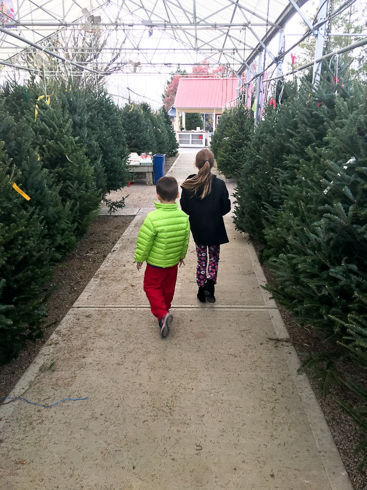 Ideas for Family Traditions for Chrismas-shopping for a Christmas tree