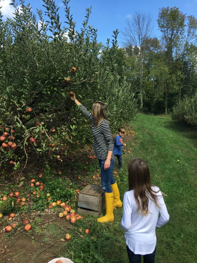 Apple Picking Apple Recipes you Must Make this fall