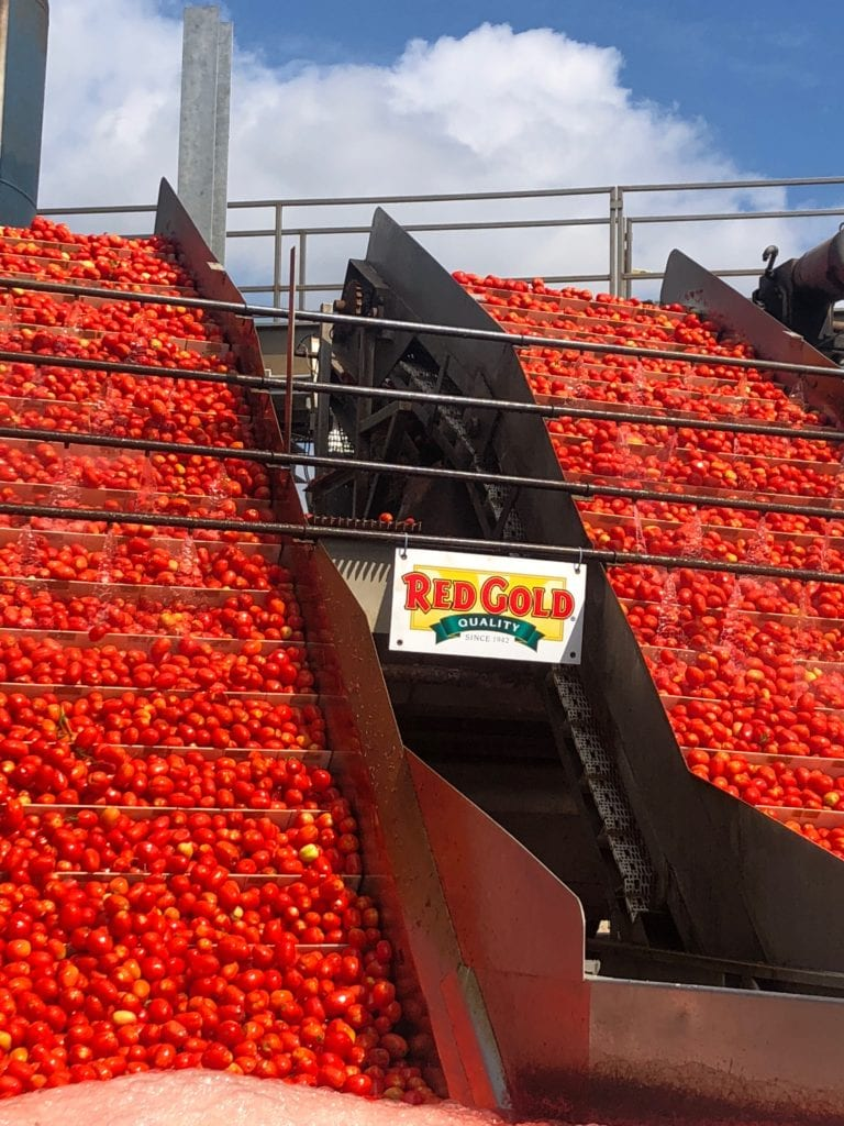 Are Canned Foods Nutritious? At Red Gold processing plant