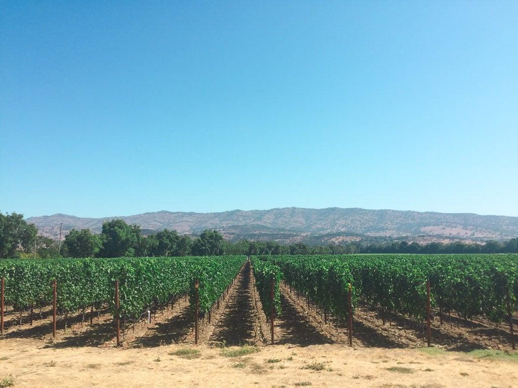 Napa Valley Day Trip