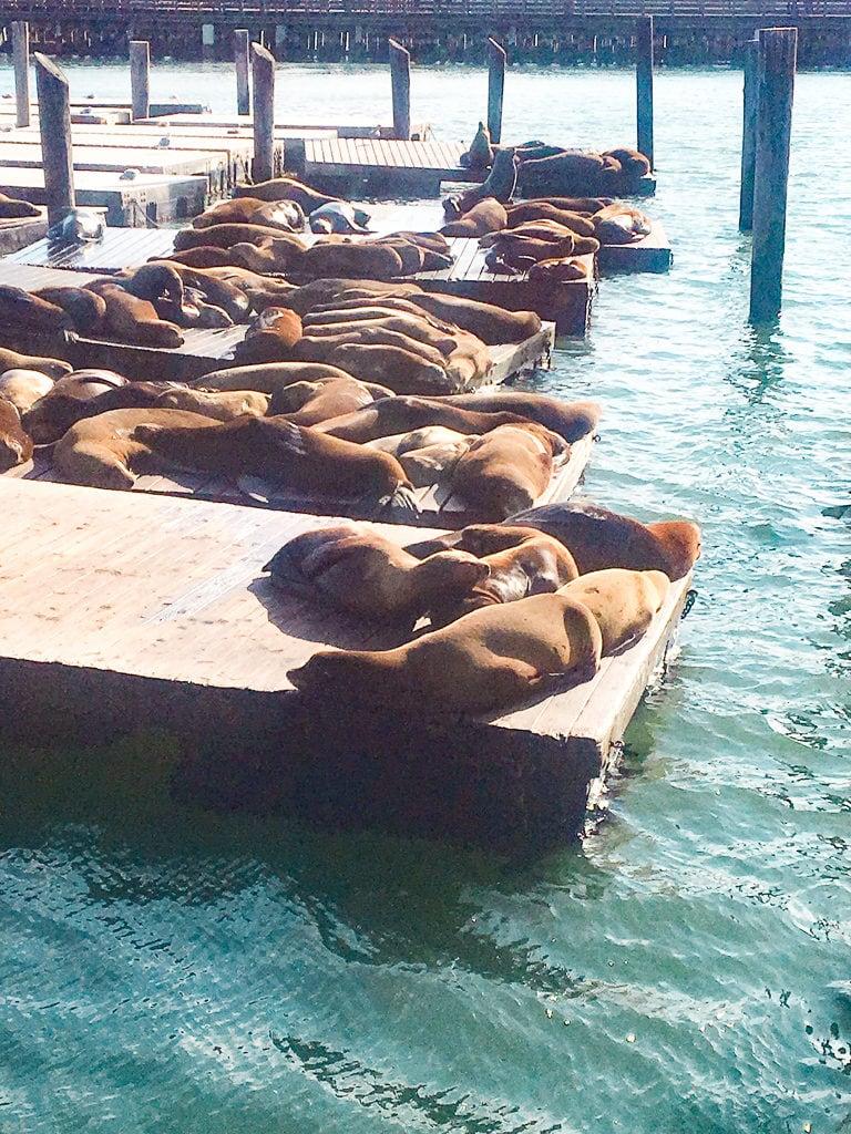 Peir 39 Sea Lions
